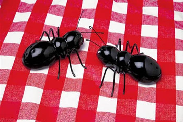 karınca tuzluklar