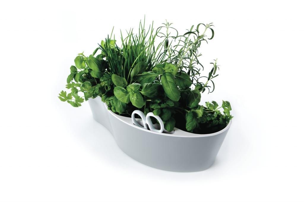 dekoratif mutfak sebze saksıları