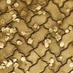 pierre-cardin-3-boyutlu-hali-modelleri