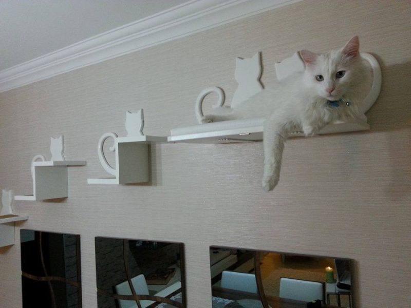 beyaz kedi raflari
