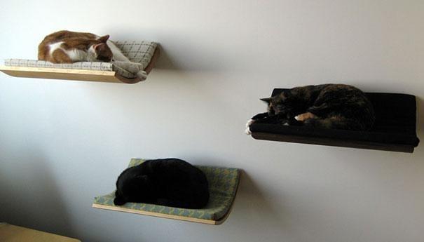 duvara monte kedi yatagi