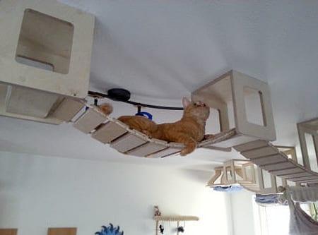 kediler için harika tasarimlar
