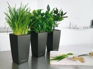 mutfak saksi bitki