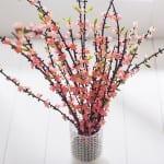 plum blossom english home