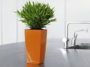 renkli mutfak saksi bitki