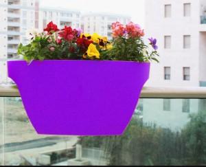 mor renkli balkon saksisi