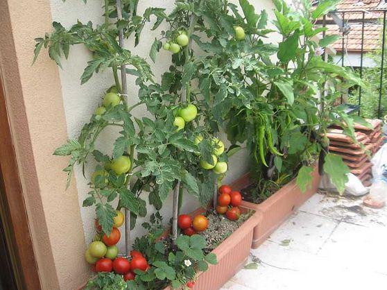 Balkonda Sebze Yetiştirmek için Uzun Saksılar